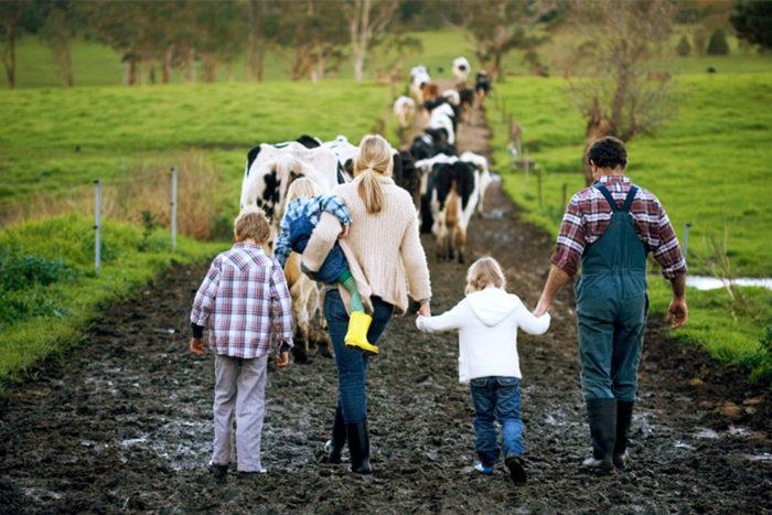крестьянское (фермерское) хозяйство